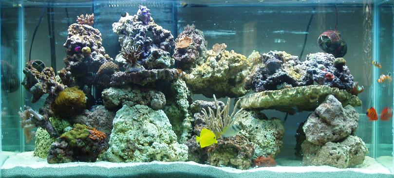 I Had Just Filled The Display With All Live Rock And Livestock From My Old 55 Gallon System Day Before Only Top Most