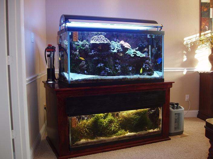 My 90 Gallon Reef Aquarium Overview